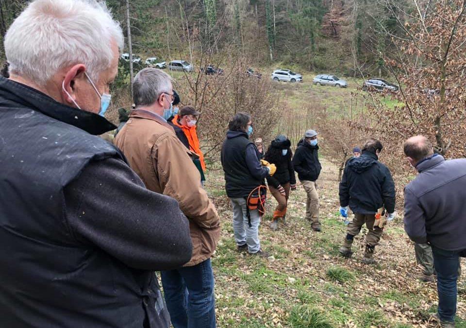 Nouvelle formation : taille des arbres truffiers
